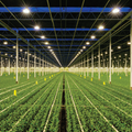 Evaluating the Safety and Performance of Horticultural Lighting